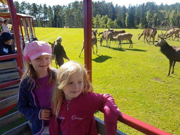 Zu sehen sind zwei Kinder in einem Elchpark.