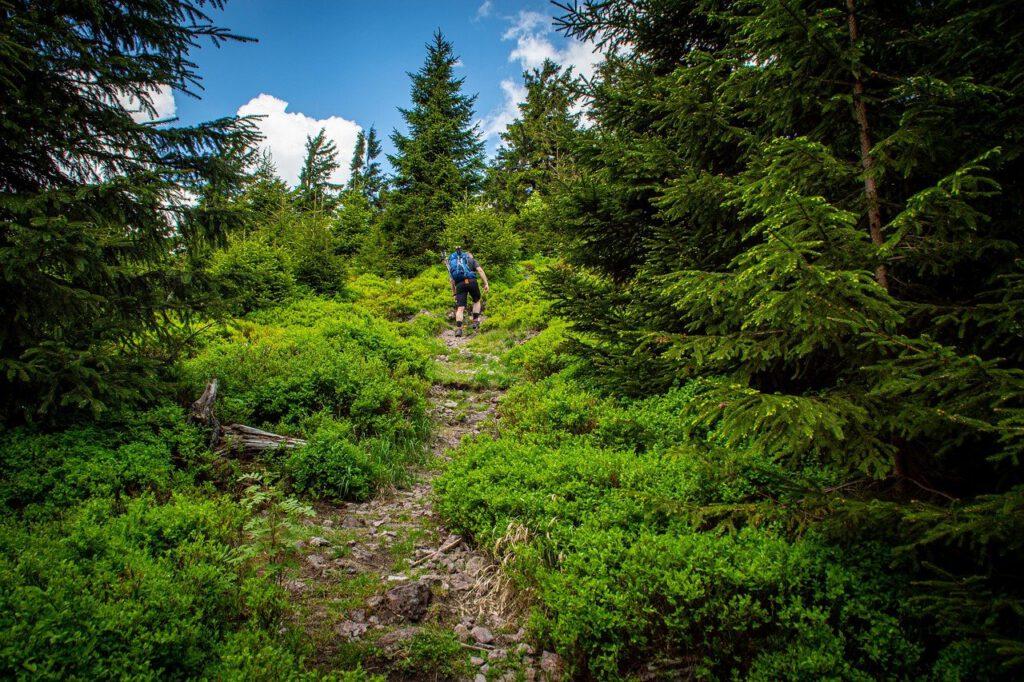 Zu sehen ist ein Wanderer im Thüringer Wald.